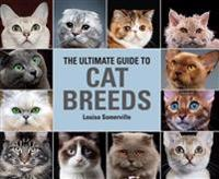 Ultimate guide to cat breeds - a useful means of identifying the cat breeds