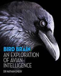 Bird Brain: An Exploration of Avian Intelligence