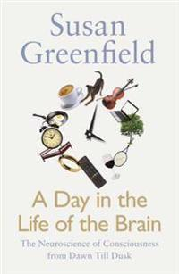 Day in the life of the brain - the neuroscience of consciousness from dawn