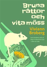 Bruna råttor och vita möss