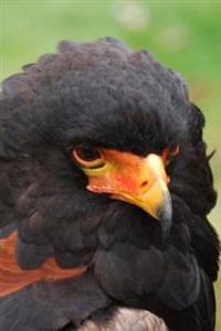 Bateleur Eagle Portrait Journal: 150 Page Lined Notebook/Diary