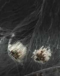 New Geographies, 8: Island