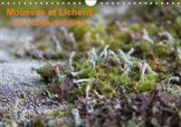 Mousses Et Lichens De Fontainebleau 2017