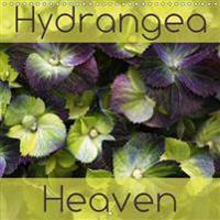 Hydrangea Heaven 2017