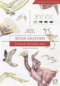 Avian Anatomy