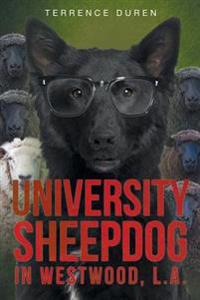 University Sheepdog in Westwood, L.A.