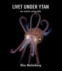 Livet under ytan en marin artguide