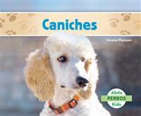 Caniches (Poodles )
