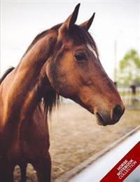 Horse Notebook Collection: (Horse Notebook, Journal, Diary) (Notebook Gifts) Collect Them All