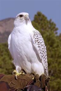 Gyrfalcon Bird Journal: 150 Page Lined Notebook/Diary