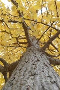 Yellow Leaves on a Gingko Tree in Autumn: 150 Page Lined Notebook/Diary
