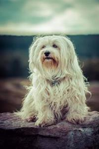 A Cuddly Havanese Dog Journal: 150 Page Lined Notebook/Diary