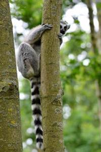 Ring-Tailed Lemur Playing Peek-A-Boo Journal: 150 Page Lined Notebook/Diary