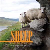 Sheep Calendar 2017: 16 Month Calendar