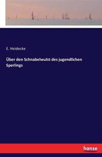 Uber Den Schnabelwulst Des Jugendlichen Sperlings