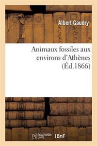 Animaux Fossiles Aux Environs D'Athenes