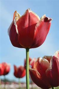 Journal: Red Tulips