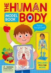 Human body model book