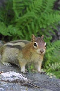 Golden-Mantled Ground Squirrel Jasper National Park Alberta Canada Journal: 150 Page Lined Notebook/Diary