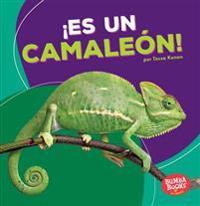 ¡es Un Camaleón! (It's a Chameleon!)