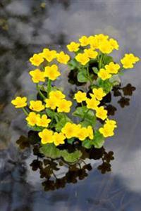 Pretty Yellow Kingcup Marsh-Marigold Caltha Palustris Flower Journal: 150 Page Lined Notebook/Diary