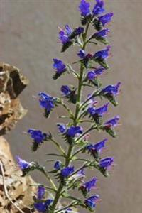 Beautiful True-Blue Flowers of the Italian Bugloss Blossoming in the Summer Journal: 150 Page Lined Notebook/Diary