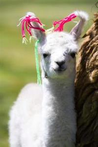 Adorable White Baby Llama in Altiplano Bolivia Journal: 150 Page Lined Notebook/Diary