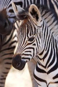 An Adorable Baby Burchell's Zebra Foal Journal: 150 Page Lined Notebook/Diary