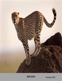 Speedy Cheetah