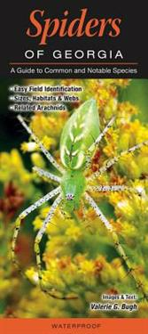 Spiders of Georgia: A Guide to Common & Notable Species