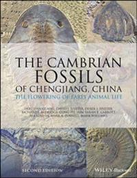 Cambrian Fossils of Chengjiang, China