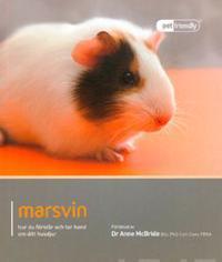 Marsvin : hur du förstår och tar hand om ditt husdjur