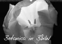 Botanica in B&W 2018