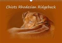 Chiots Rhodesian Ridgeback 2018