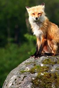 Journal Red Fox Sitting on Rock: (Notebook, Diary, Blank Book)