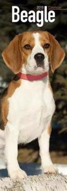 Beagle slim calendar 2018