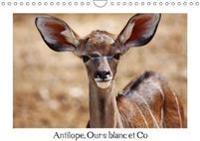 Antilope, Ours Blanc Et Co 2018