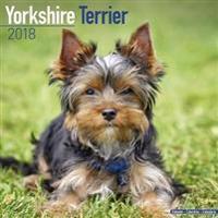 Yorkshire Terrier Calendar 2018