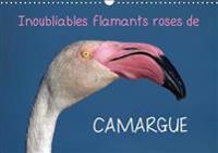 Inoubliables Flamants Roses De Camargue 2018