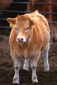 Farm Journal Piedmontese-Hereford Crossbred Calf: (Notebook, Diary, Blank Book)