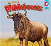 All about Wildebeests