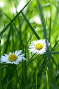 White Daisy Flowers in the Grass: A Blank Lined Journal for Writing and Note Taking