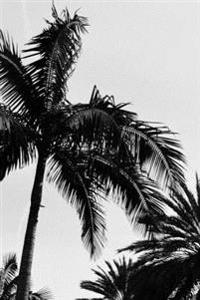 Journal: Black & White Palm Trees, 6x9, 150 Lined Sheets