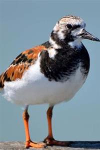Ruddy Turnstone Small Wading Bird Journal: 150 Page Lined Notebook/Diary