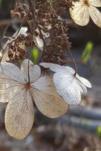 Hydrangea Flowers Journal: (Notebook, Diary, Blank Book)