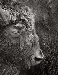 Bison: Notebook