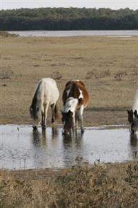 Wild Horses on Assateague Island Journal: 150 Page Lined Notebook/Diary