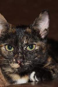 Beautiful Green-Eyed Tortoiseshell Kitty Cat Journal: 150 Page Lined Notebook/Diary
