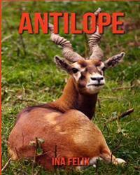 Antilope: Le Livre Des Informations Amusantes Pour Enfant & Incroyables Photos D'Animaux Sauvages - Le Merveilleux Livre Des Ant
