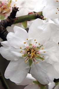 Lovely White Almond Blossom Up Close Flower Journal: 150 Page Lined Notebook/Diary